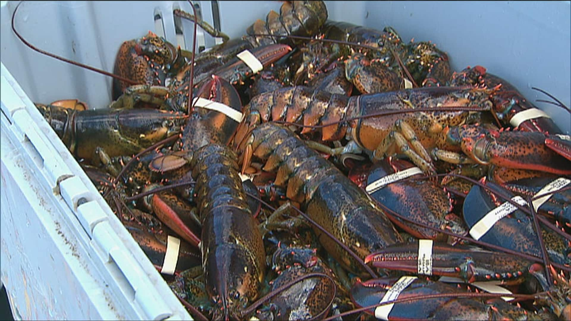 Despite tension over right whale deaths, Maine lobster group backs ...