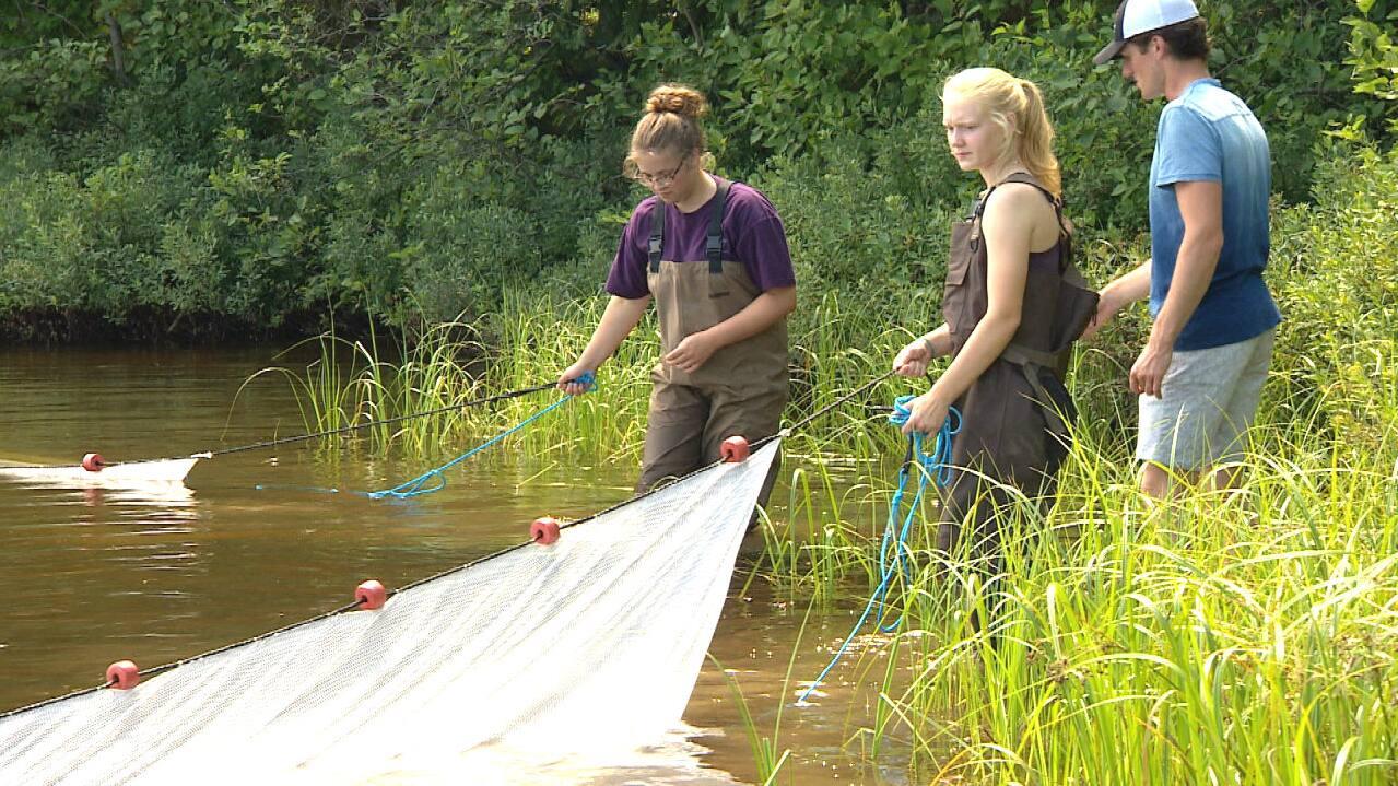 Freshwater fish jobs winnipeg - Poster Of Video Clip
