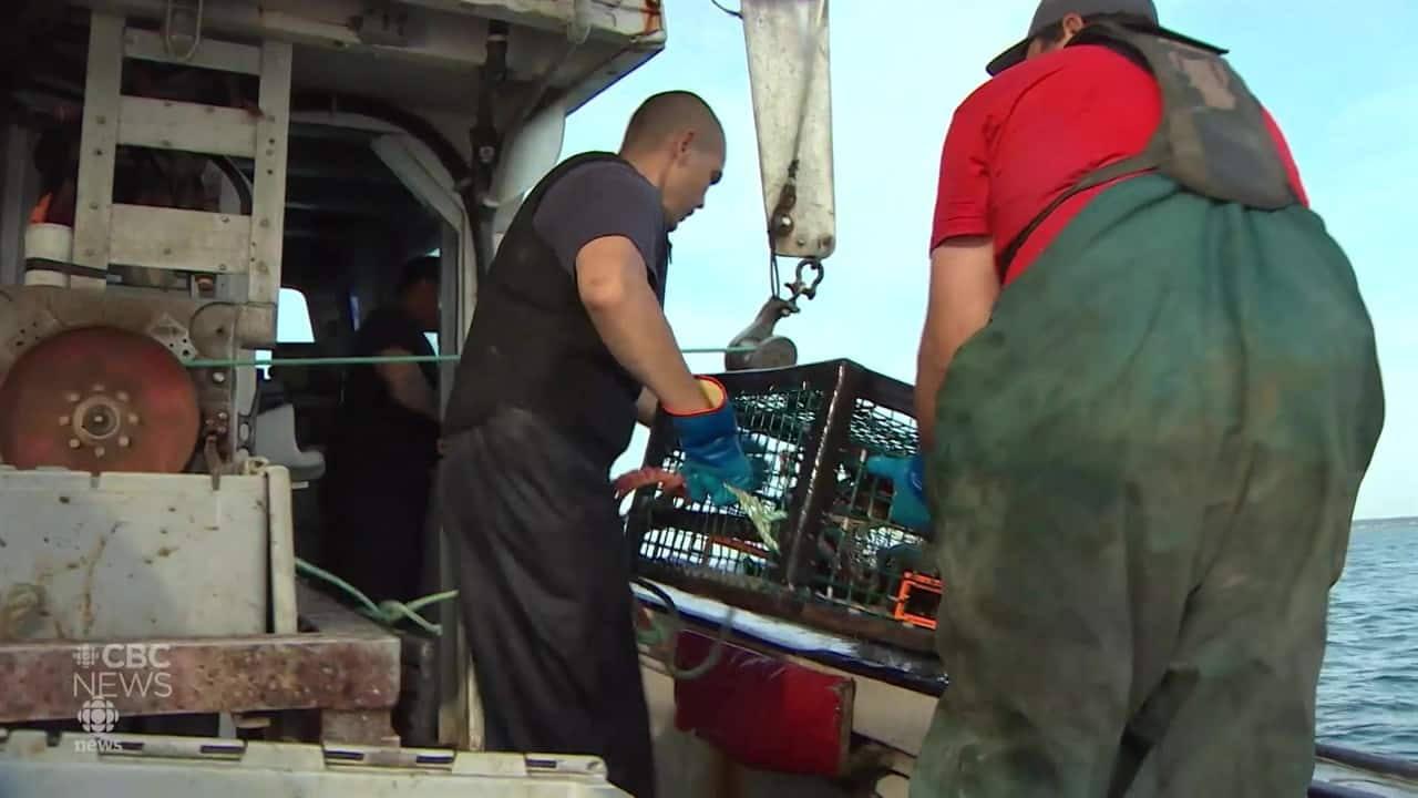 Mi'kmaq stay ashore as commercial lobster season opens in largest N.S. fishing area