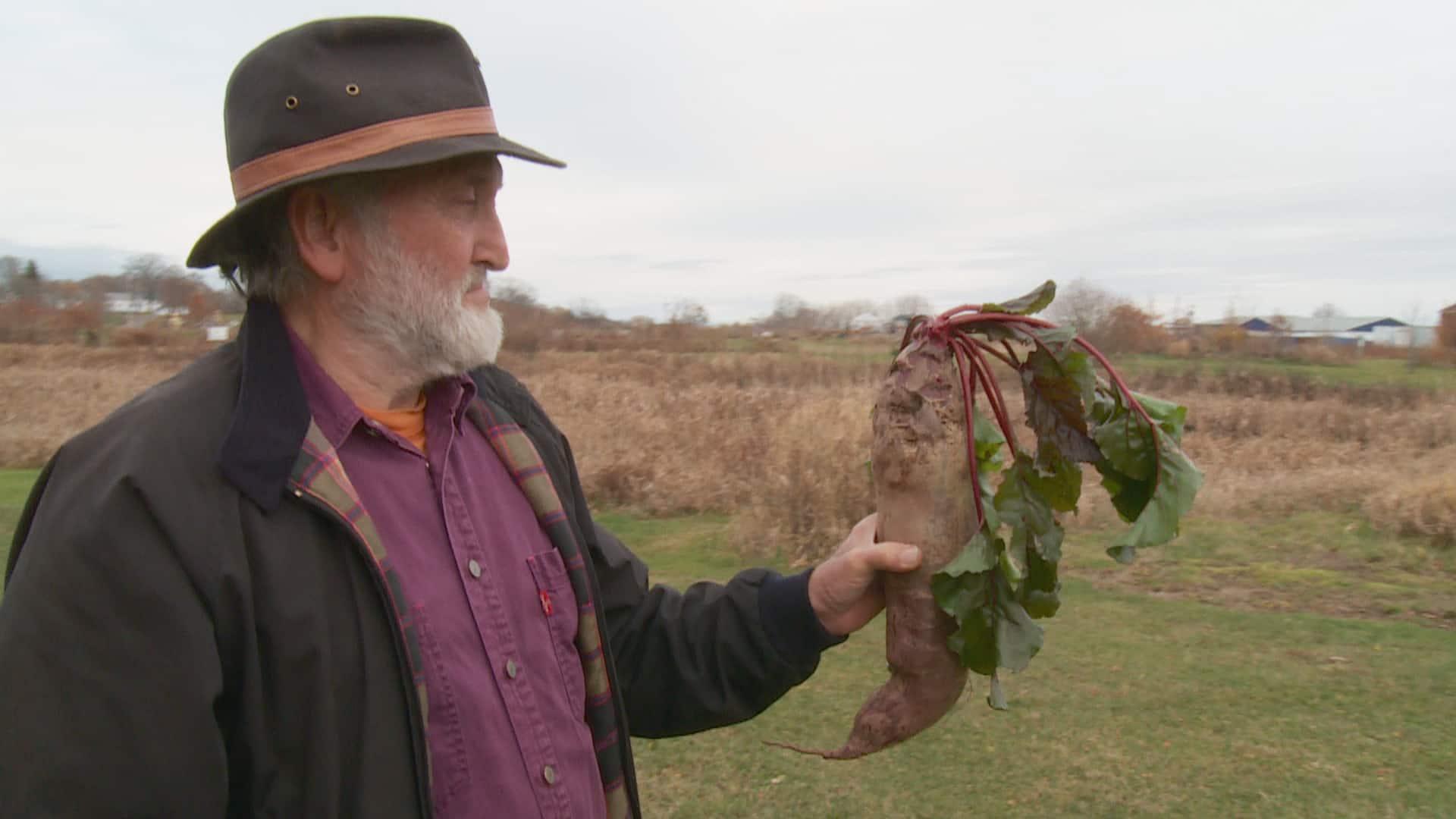 P.E.I. man Develops humongous beet, enough for'10 Foods' thumbnail