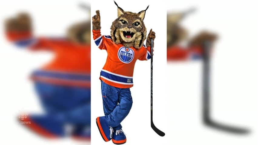 Everyone S A Critic As Oilers Unveil New Mascot Hunter The Canadian Lynx Cbc News