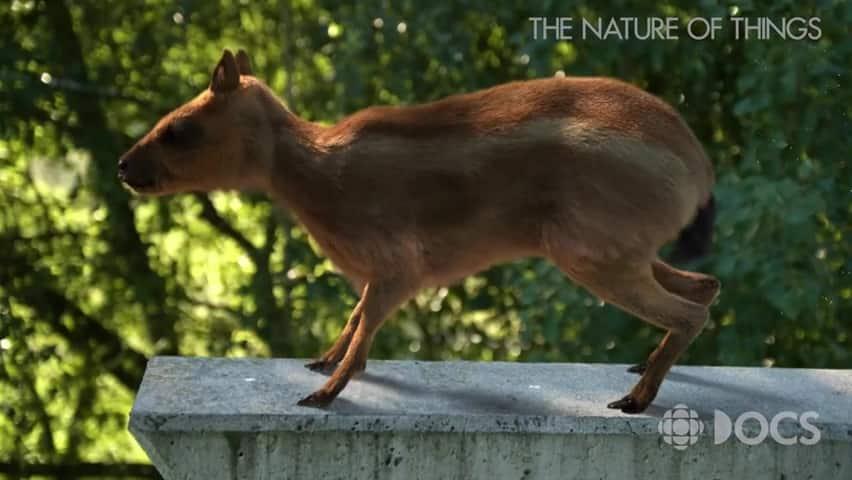 equus plot summary