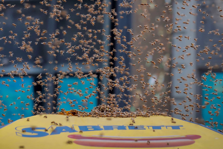 Watch NY police vacuum up bee swarm