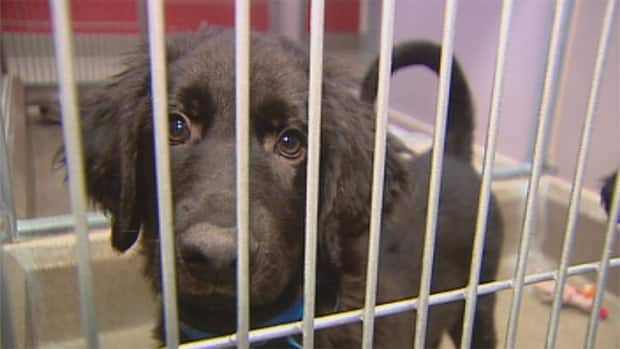 RAW Dogs relocated to Edmonton shelter