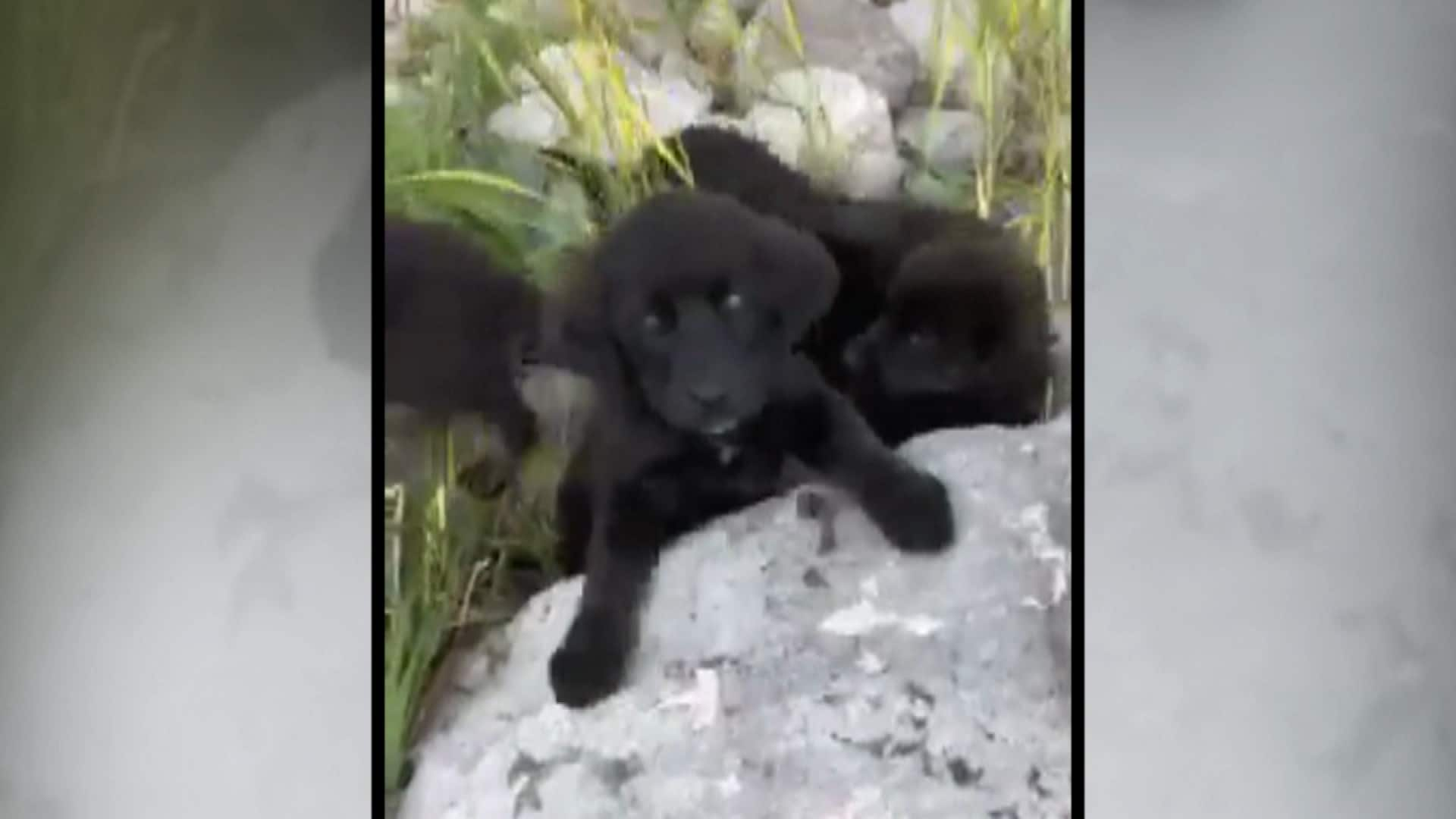 Stranded Puppies Rescued From Northern Manitoba Island