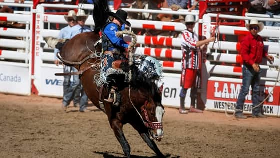 Calgary Stampede Rodeo Wild Card Saturday Cbc Player