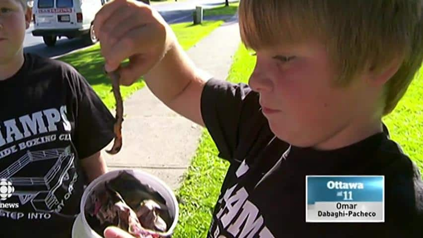 Image result for child selling worms