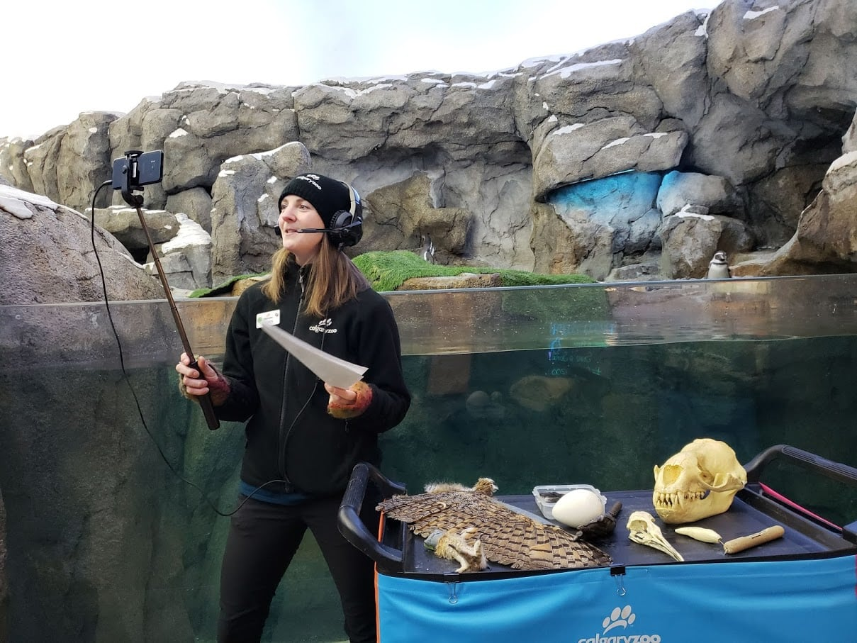 How virtual field trips are bringing animals, art, music and more directly to students