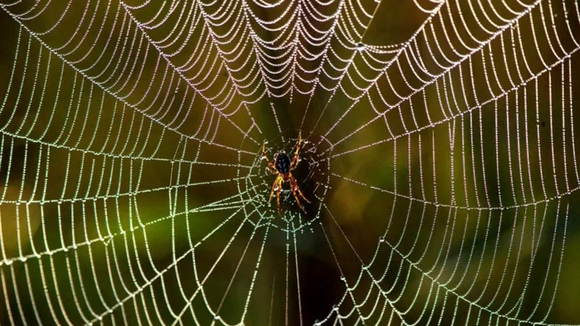 MIT researchers turn spider webs into musical forms